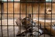 É a Favor ou Contra a Existência de Jardins Zoológicos?