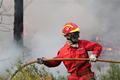 Acha que se devia retirar os bombeiros da frente de fogo ou do salvamento das florestas , animais ou pessoas ?