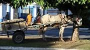 Concorda com a utilização de veículos de tração animal em Portugal?
