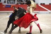 Concorda com o fim das Touradas em Portugal?