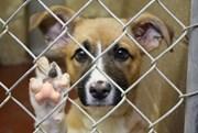 Acha que a Lei Portuguesa Protege de Forma Eficaz os Animais?